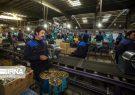 میزان خسارت ویروس کرونا بر صنعت استان مازندران چقدر بود؟