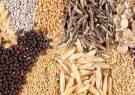 فاسد شدن ۱۰۰۰ تن بذر علوفه به دلیل اختلافات سه وزارت خانه